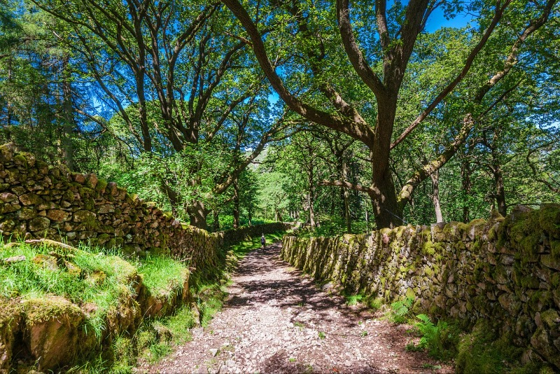 Enjoy many a magical walk from our doorstep