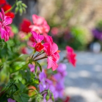 Flowers galore in our beautiful gardens